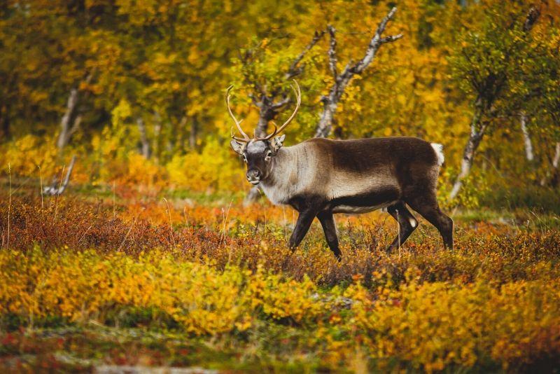 Parque Nacional Abisko, Suecia