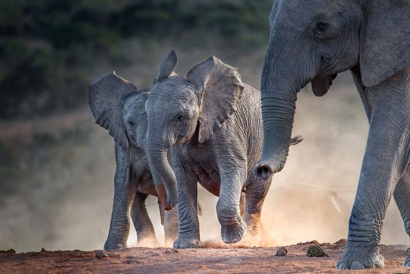 Addo Elephant National Park, South Africa - best national parks in the world