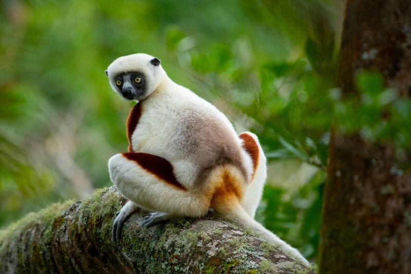 Parque Nacional Andasibe-Mantadia, Madagascar: los mejores parques nacionales del mundo