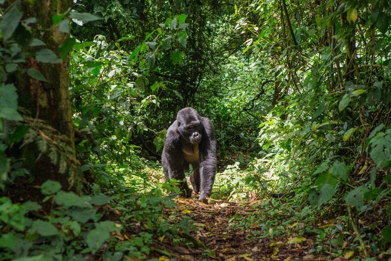 Parque Nacional Impenetrable de Bwindi, Uganda: los mejores parques nacionales del mundo