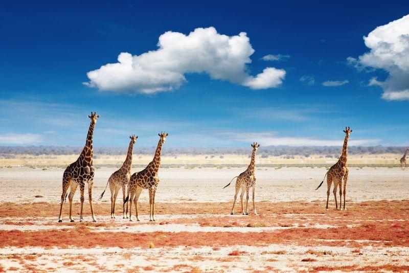 Parque Nacional de Etosha, Namibia: los mejores parques nacionales del mundo