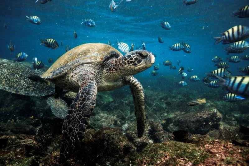 Parque Nacional Galápagos, Ecuador - los mejores parques nacionales del mundo