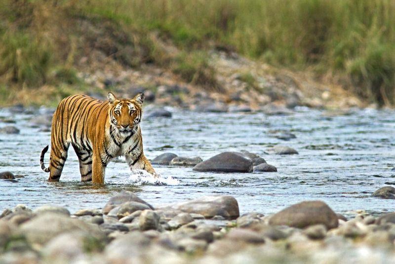Parque Nacional Jim Corbett, India: los mejores parques nacionales del mundo