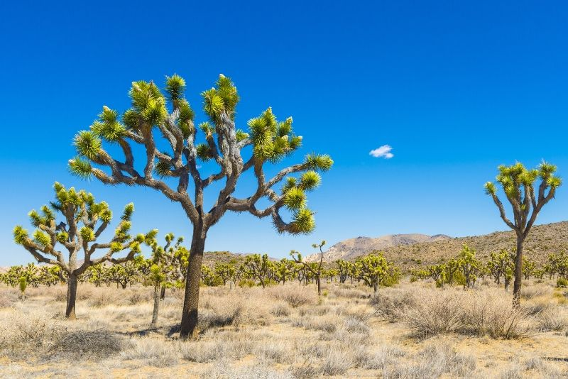 Joshua Tree National Park, United States of America - best national parks in the world