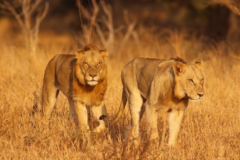 Parque Nacional Kruger, Sudáfrica - los mejores parques nacionales del mundo