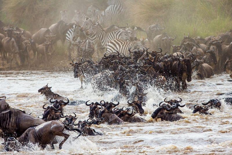 Parque Nacional Maasai Mara, Kenia: los mejores parques nacionales del mundo