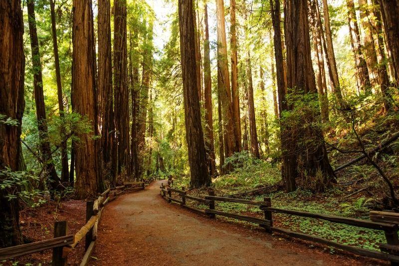 Parque Nacional Muir Woods, Estados Unidos de América: los mejores parques nacionales del mundo