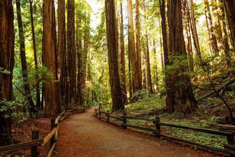 Muir Woods National Park, United States of America - best national parks in the world
