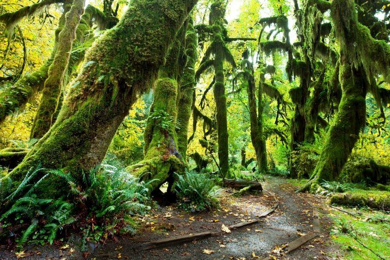 Parque Nacional Olympic, Estados Unidos de América: los mejores parques nacionales del mundo