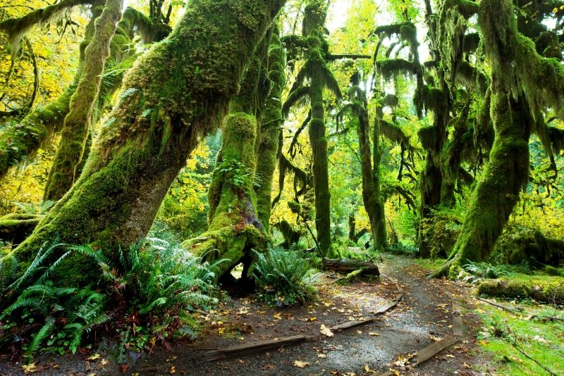 Olympic National Park, United States of America - best national parks in the world