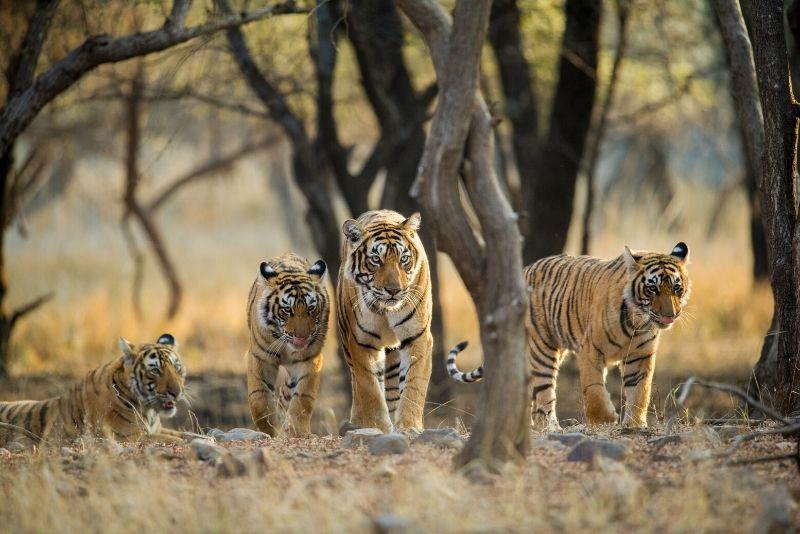 Parque nacional de Ranthambore, India: los mejores parques nacionales del mundo