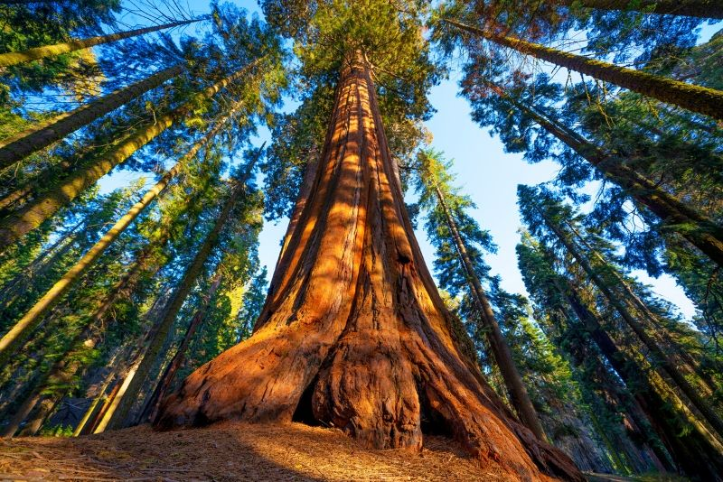 Sequoia National Park, United States of America - best national parks in the world
