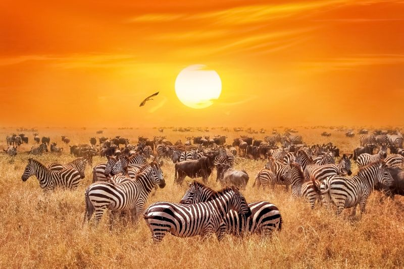 Serengeti National Park, Tanzania - best national parks in the world