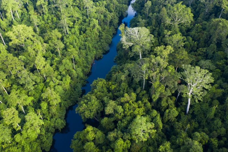 Taman Negara National Park, Malaysia - best national parks in the world