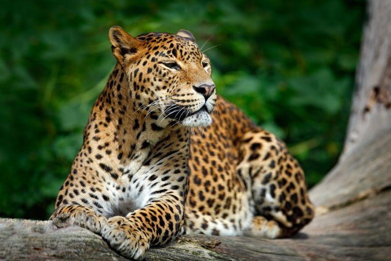 Parque nacional Yala, Sri Lanka - los mejores parques nacionales del mundo