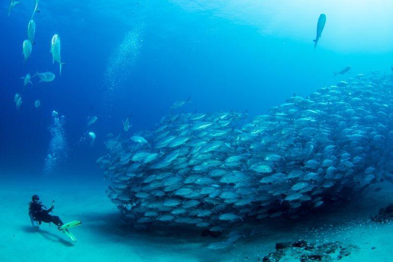 marine sanctuaries and ocean habitats