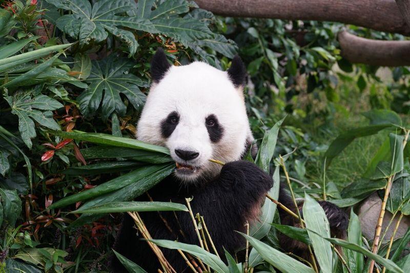 zoo live cam