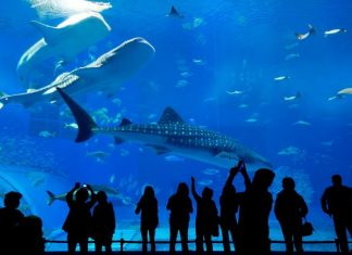 50 best aquariums in the world