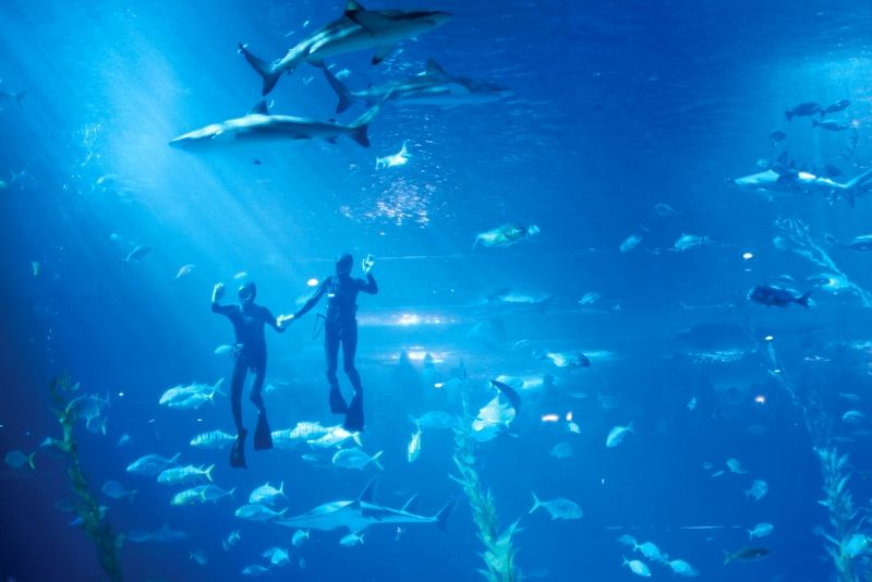 Aqua Planet Jeju, South Korea - #11 best aquariums in the world