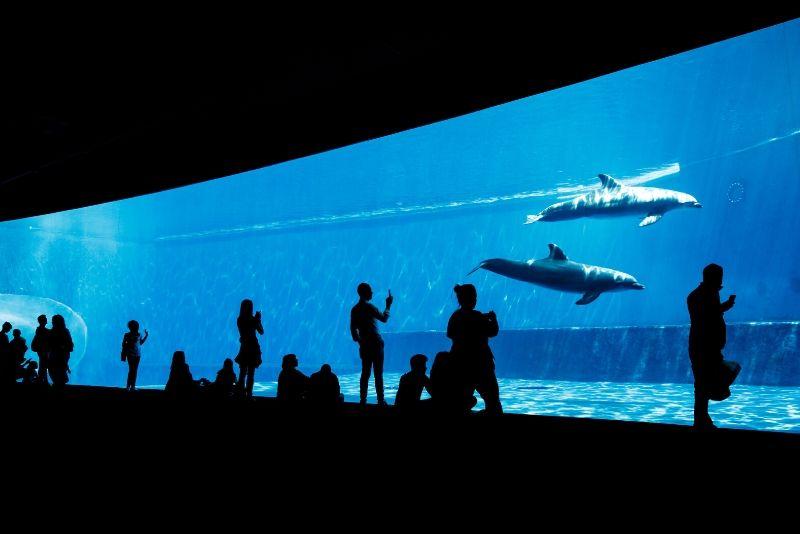 Aquarium of Genoa, Italy - #4 best aquariums in the world