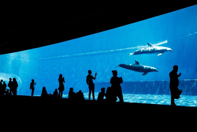 Aquarium of Genoa, Italy - #4 best aquariums in the world