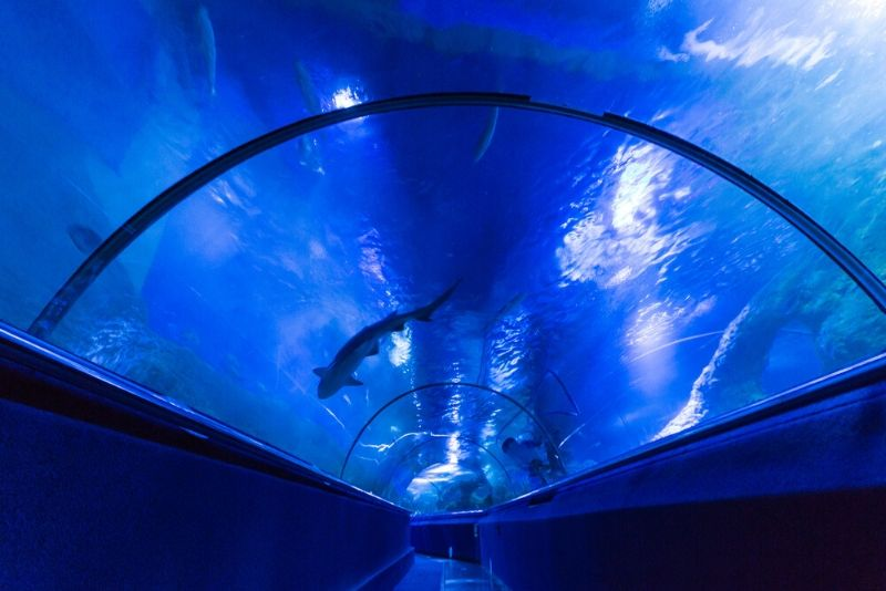 Aquarium of Western Australia, Australia - #33 best aquariums in the world