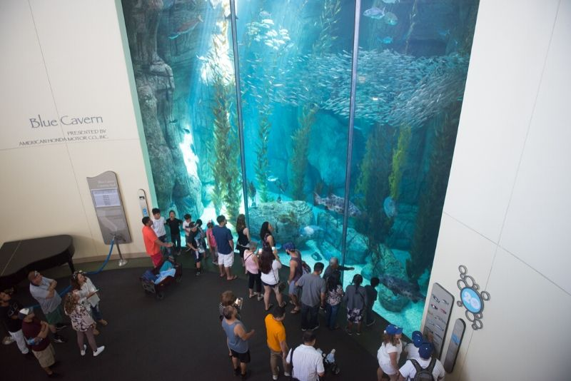 Aquarium of the Pacific, United States - #19 best aquariums in the world