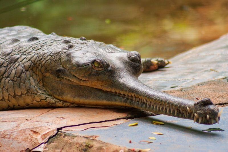 Arignar Anna Zoological Park, India
