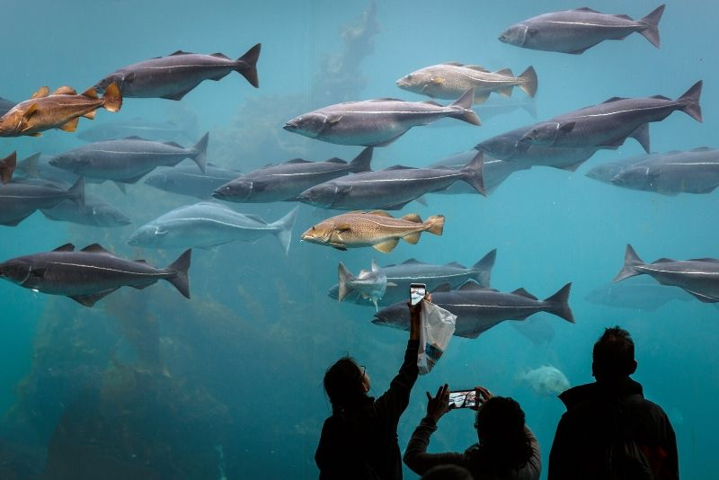 Atlantic Sea Park, Norway - #42 best aquariums in the world