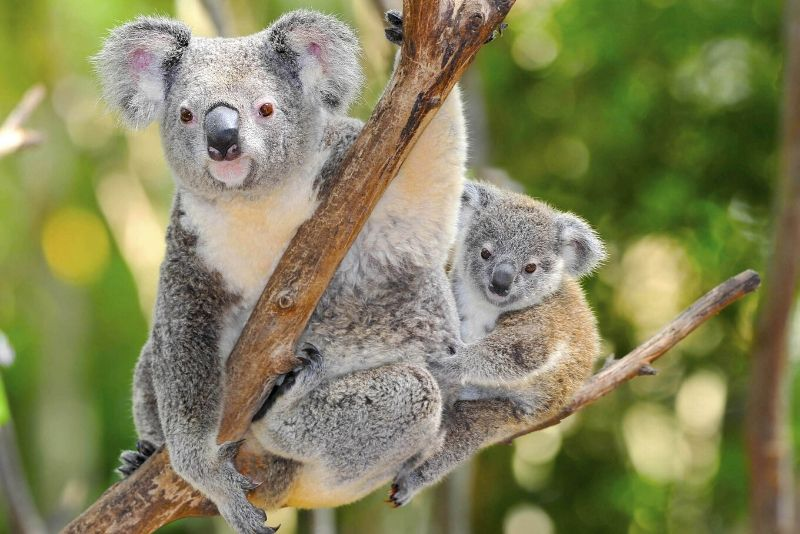 Australia Zoo, Australia