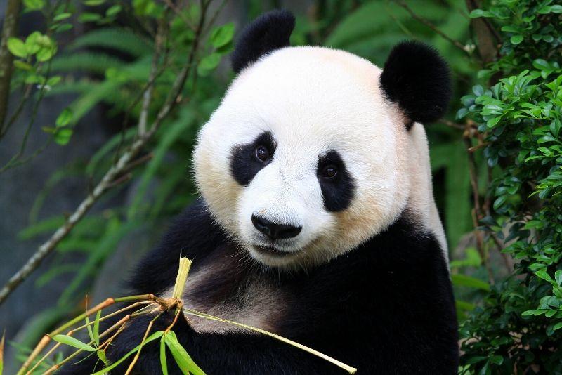 Beijing Zoo, China