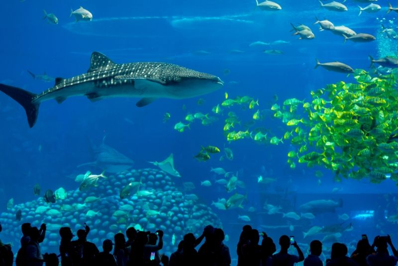 Chimelong Ocean Kingdom, China - #9 best aquariums in the world