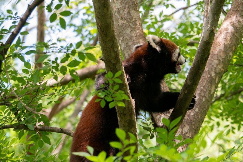 Cincinnati Zoo & Botanical Garden, USA