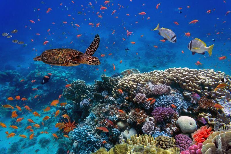 Cube Oceanarium, China - #16 best aquariums in the world