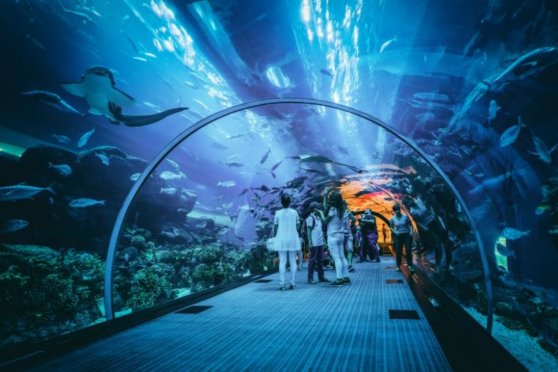 Dubai Aquarium & Underwater Zoo, United Arab Emirates - #5 best aquariums in the world