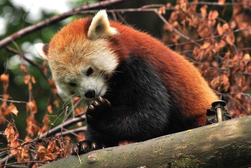 Dublin Zoo, UK