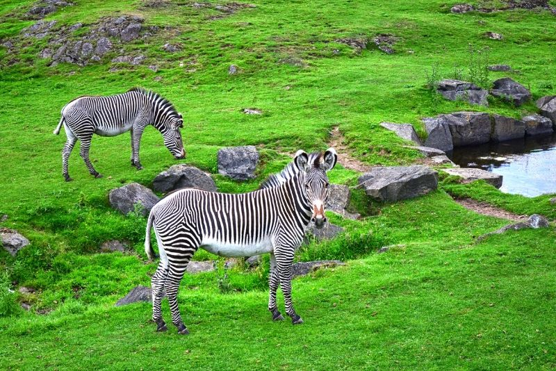 Edinburgh Zoo, UK