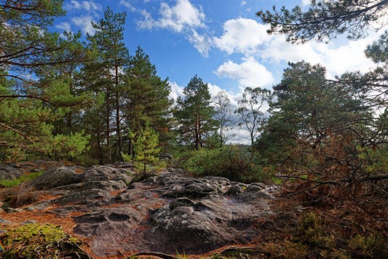 Sorties autour de Paris à la forêt de Fontainebleau