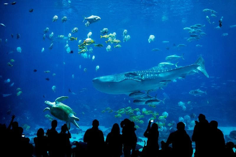 Georgia Aquarium, United States - #3 best aquariums in the world