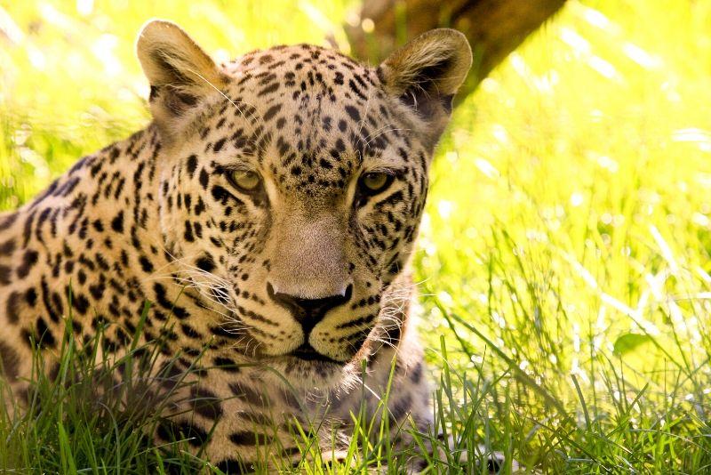 Gramado Zoo, Brazil