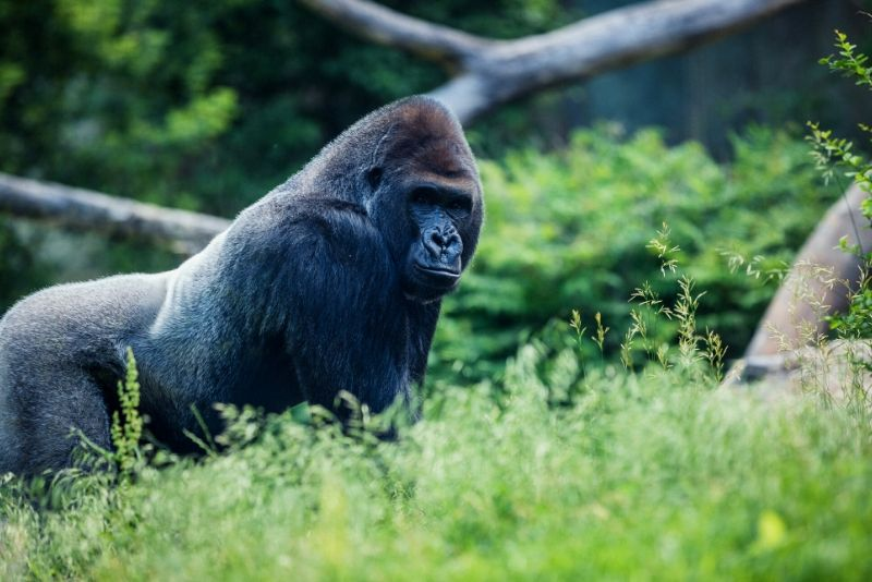 Henry Doorly Zoo, USA