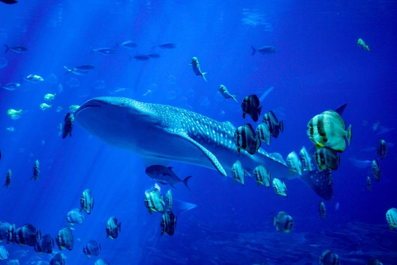 Kenting National Museum of Biology and Aquarium, Taiwan - #10 best aquariums in the world