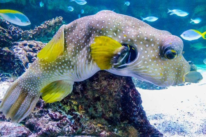 Aquarium de La Rochelle, France - #41 best aquariums in the world