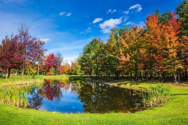 Sorties autour de Paris aux 3 étangs en forêt à Meudon