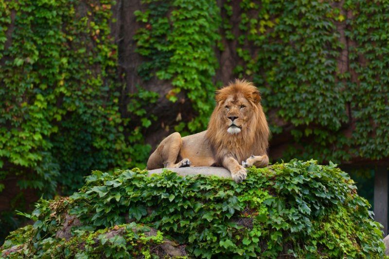 Lincoln Park Zoo, USA