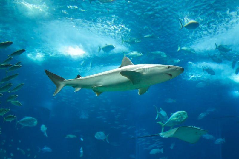 Lisbon Oceanarium, Portugal - #12 best aquariums in the world