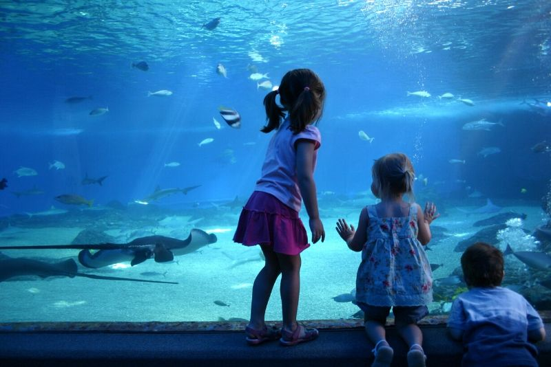 Maui Ocean Center, United States - #44 best aquariums in the world