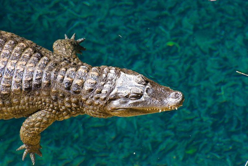 Miami Zoo, USA