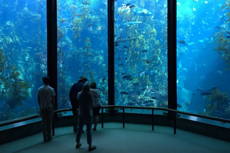 Monterey Bay Aquarium, United States - #14 best aquariums in the world