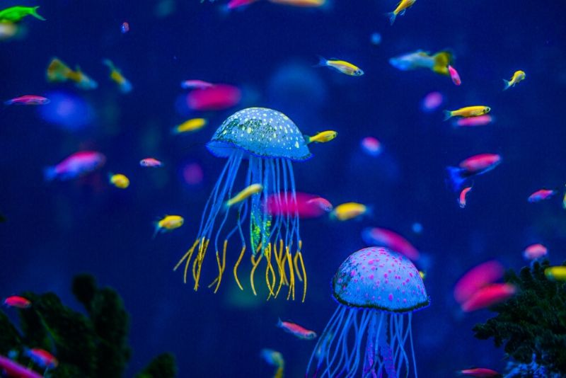 National Aquarium, United States - #47 best aquariums in the world